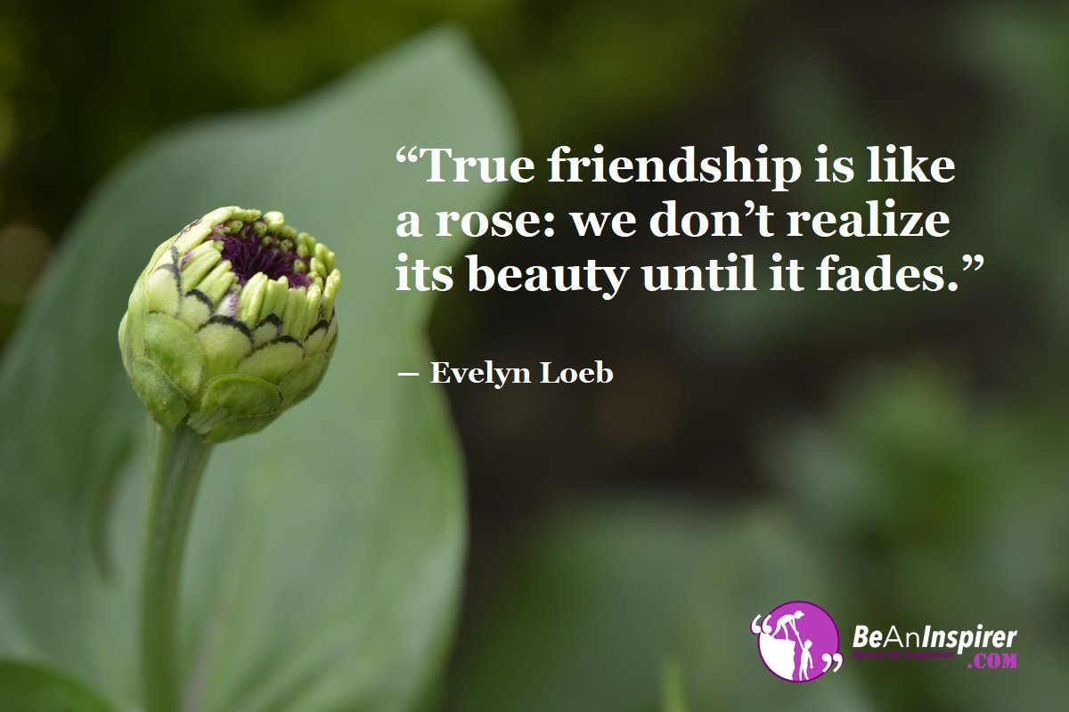 True-friendship-is-like-a-rose-we-dont-realize-its-beauty-until-it-fades-Evelyn-Loeb-Top-100-Friendship-Quotes-Be-An-Inspirer