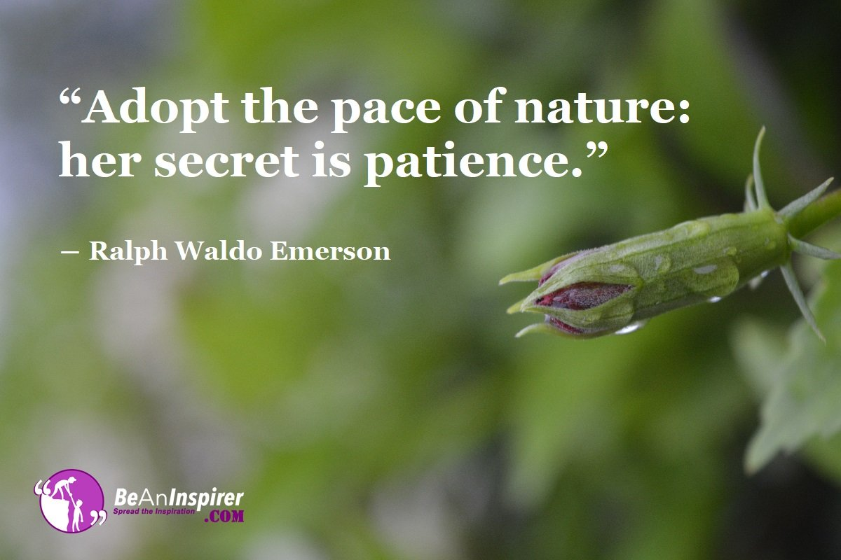 Patience The Perfect Key To Unlock Success However Hard The Path Of